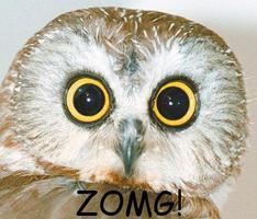 zomg-43287